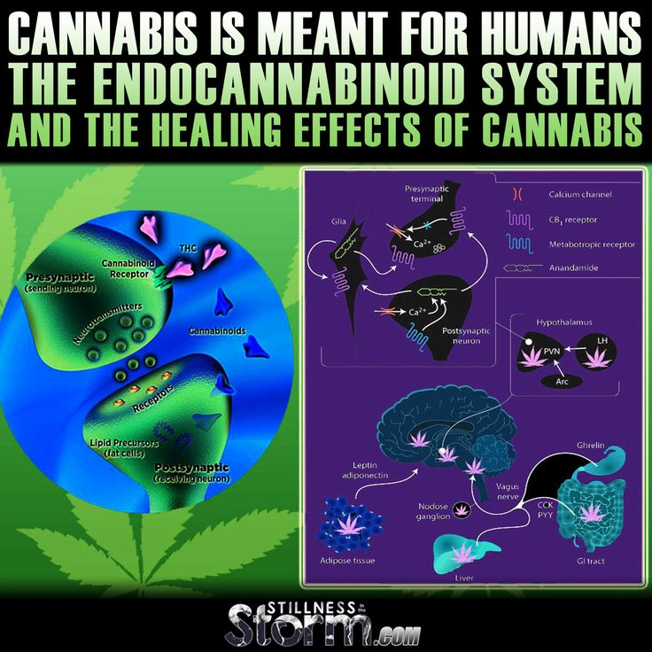 Cannabis is Meant for Humans | The Endocannabinoid System and the Healing Effects of Cannabis | Stillness in the Storm