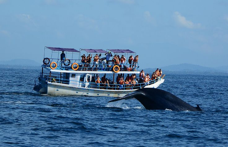 As big as jumbo jets and as elegant as ballerinas, the seas around Sri Lanka allow you the opportunity to spot an unbelievable number of whales. Watch majestic blue whales, sperm whales and playful dolphins as they gracefully glide past your boat. The ideal place to spot them is Dondra Point, which is accessible from Galle, Hikkaduwa and Mirissa. At certain times of the year, you can watch a variety of turtles hatch from conservation centres on the beach.
