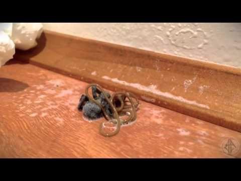 Une araignée donne naissance à une étrange créature extraña criatura en otra