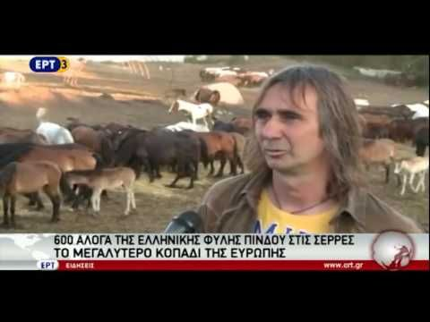 Η μεγαλύτερη φάρμα αλόγων στην Ευρώπη είναι Ελληνική
