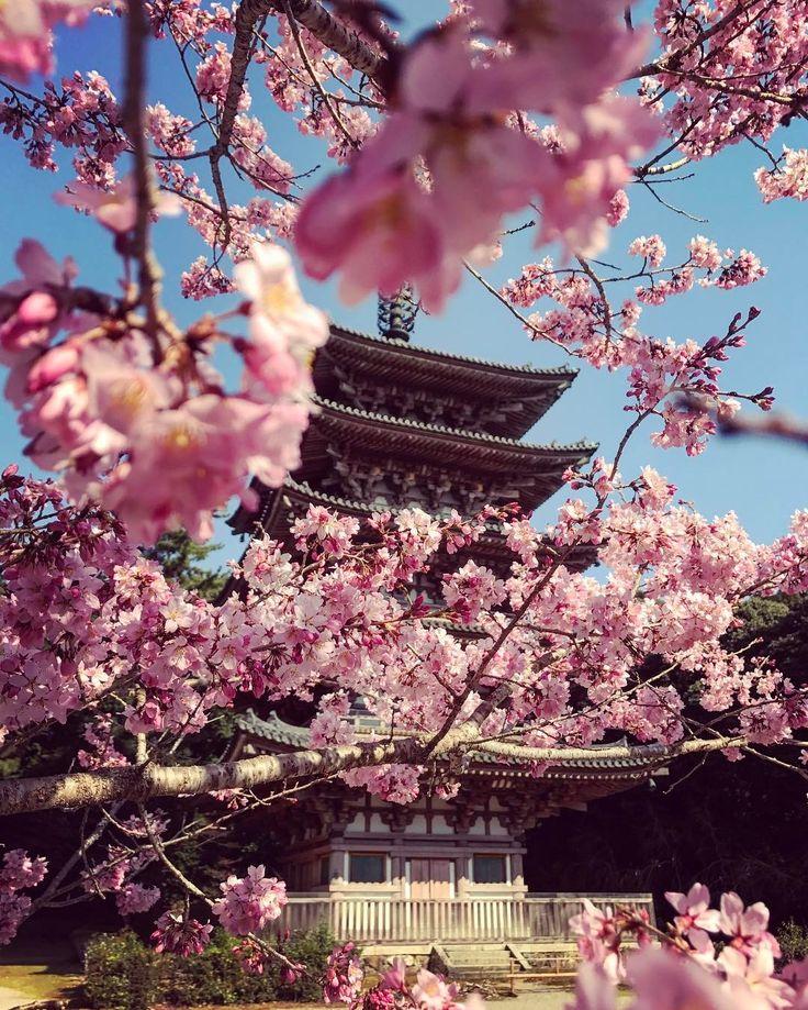 Daigo-ji Temple, Kyoto, Japan, World Heritage, Sakura, 醍醐寺, 京都, 日本, 世界遺産, 桜 - Cherry Blossom Festival