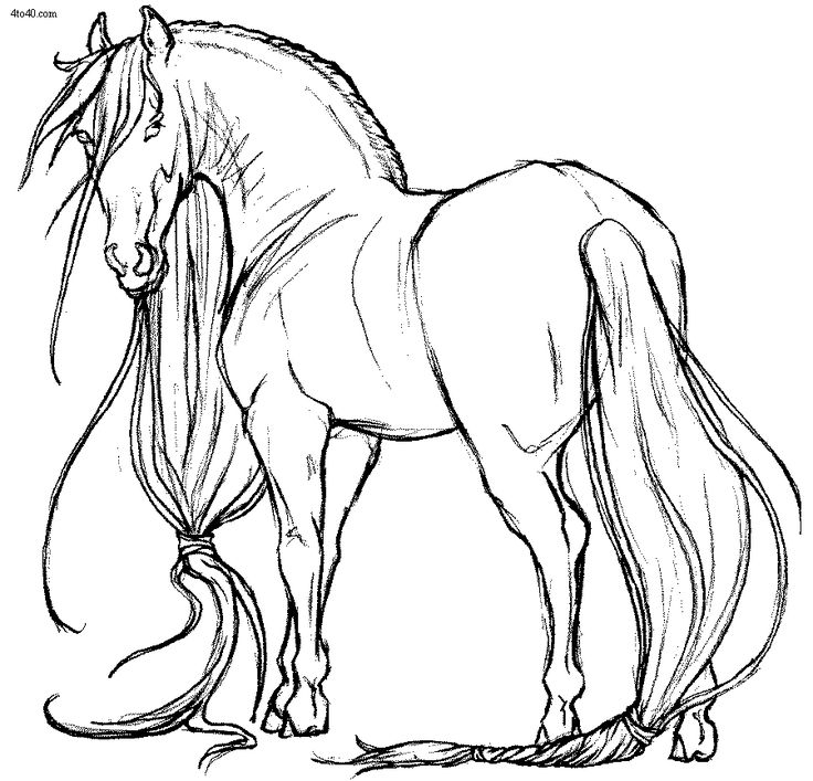 Animals Coloring Pages, Yue Horse Coloring Page, Animals Coloring Book