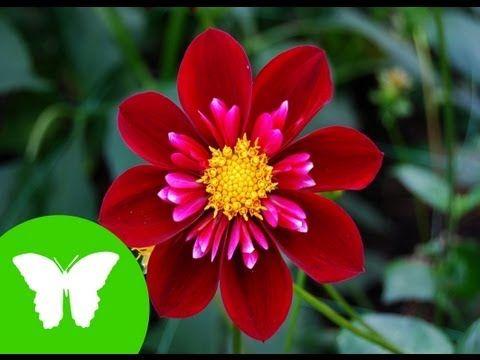 UNIDAD 5 - LAS PLANTAS - CIENCIAS NATURALES | TRABAJANDO LAS COMPETENCIAS