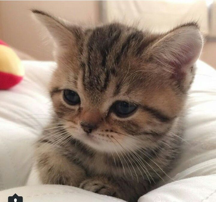I'm alone here, cuddles please ... meow
