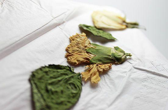 Cómo prensar flores y hojas - wikiHow