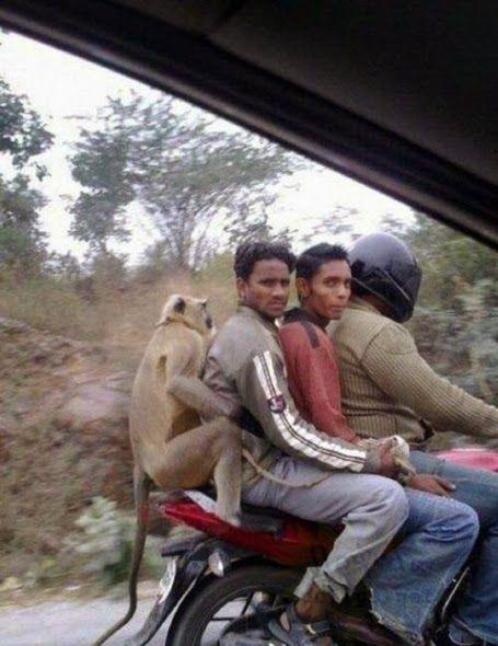 Moto con tres personas y un mono