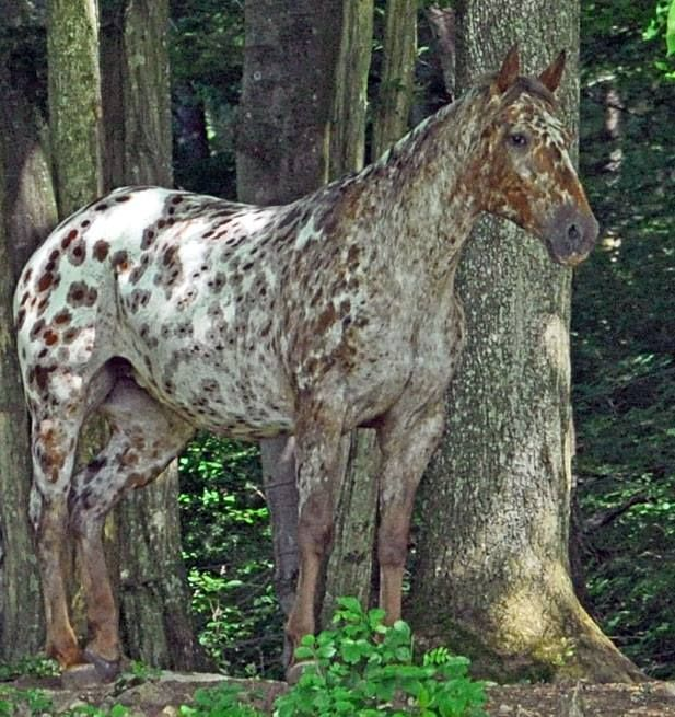 General « Heart of a Horse