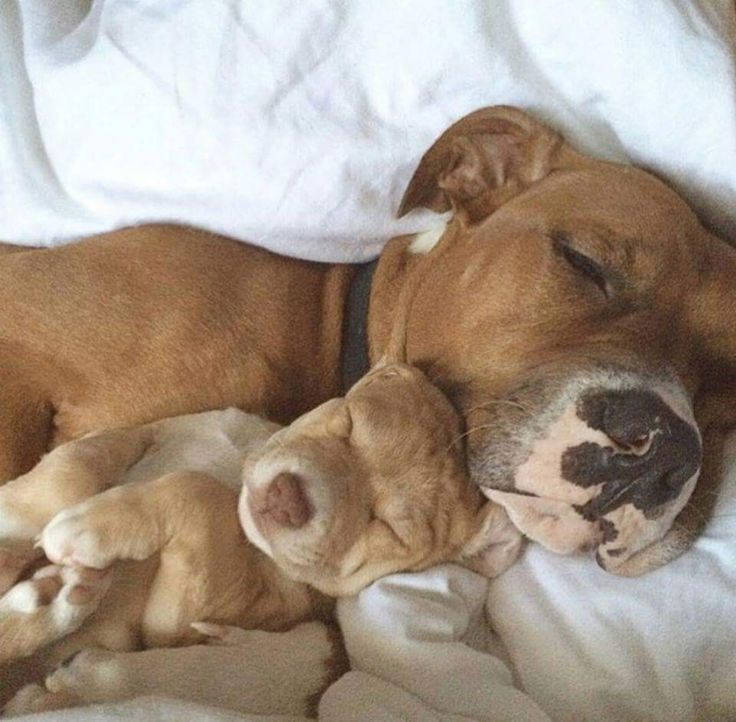 Aww look at their paws and the wrinkles on the pups head