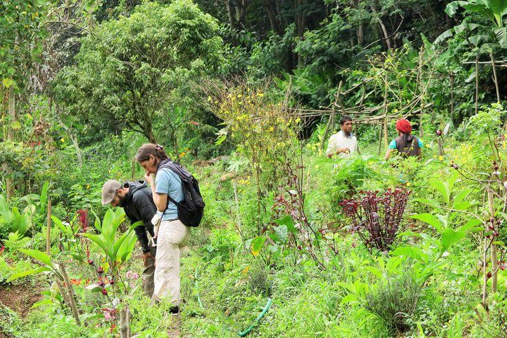 A la découvertes de la biodiversité de l'île