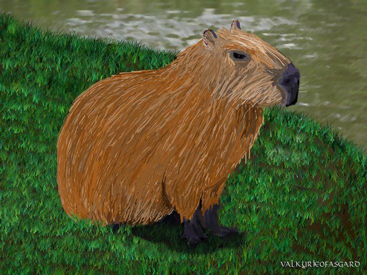 Capybara by valkyrieofasgard.deviantart.com on @DeviantArt