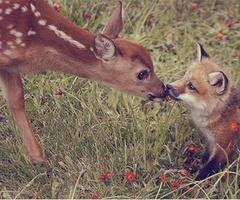 Deer.....yah...like a fox!