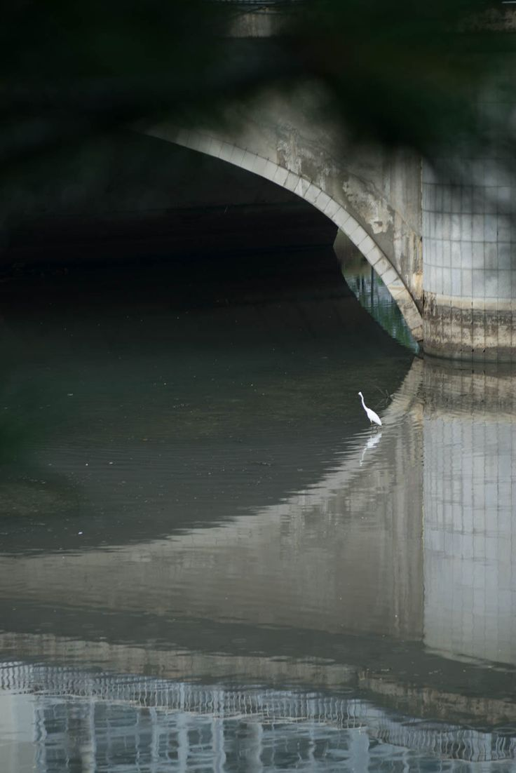 Chuncheon: Bird wading in the river