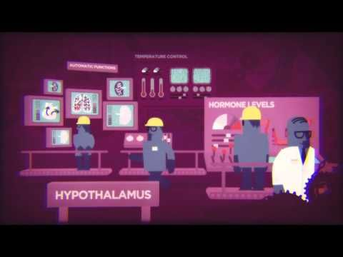 Under Construction: Alcohol and the Teenage Brain - YouTube - Turning Point Alcohol and Drug Centre - This video shows the effects of alcohol use and risky drinking on the different areas of the developing brain, as well as the impact on behaviour.