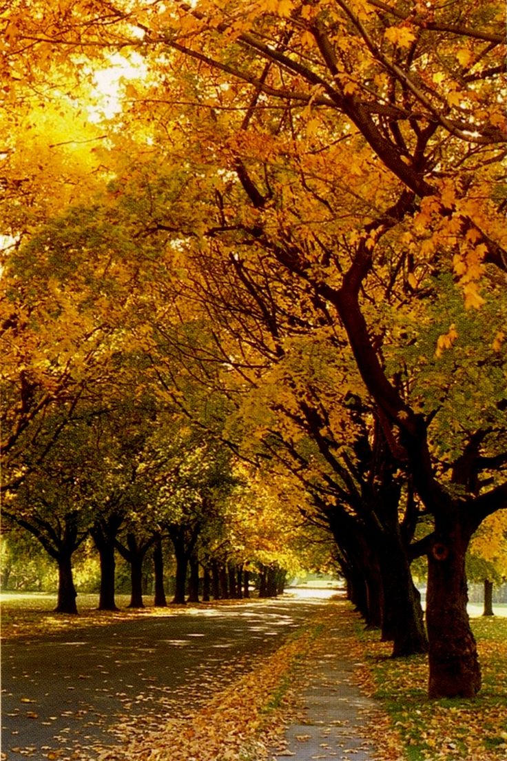 Oak trees Stellenbosch Google Image Result for http://blog.venues4africa.com/wp-content/uploads/2010/04/image.axd_.jpg