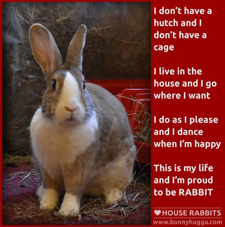 Adopt a rabbit and keep it inside the house