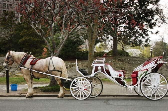 Private Horse and Carriage Ride in Central Park - TripAdvisor