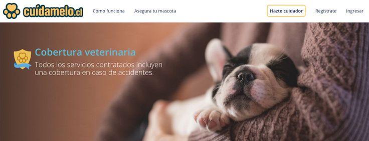 A través de Cuidamelo, se desarrolló unaplataforma colaborativa desarrrollada en Chile que ya cuenta con más de 35.000 usuarios.