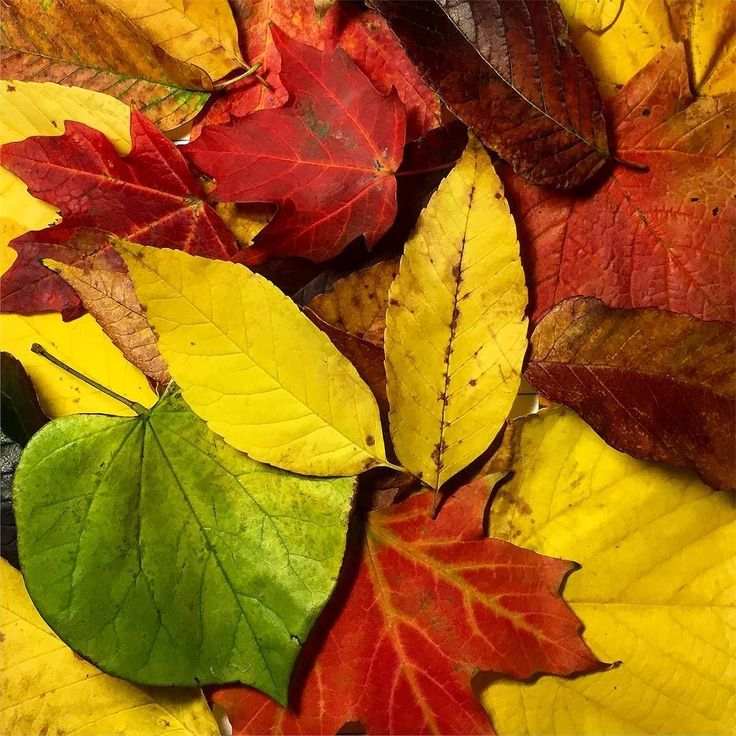 Isn't this amazing how these colorful dry leaves looking so beautiful even after they fall!! Down on a floor saying 'To Whom It May Concern' with blowing autumn wind ...; reminds me a song by The Civil Wars: Slowly counting down the days 'til I finally know your name  #Morning #FallLeaves #Colors #Pretty #DryLeaves #Fall2016 #Autumn2016 #October2016 #HappySunday #MorningShine #SundayMorning #SweetHome #PureHappiness #Hope