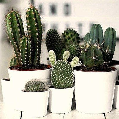 These cute cacti will be the perfect accessory for your coffee table