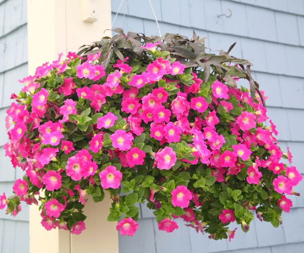 container gardening video playlist from uiextensions youtube channel