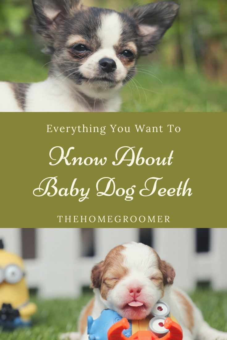 Everything You Need To Know About Dog Baby Teeth In 2020 Baby
