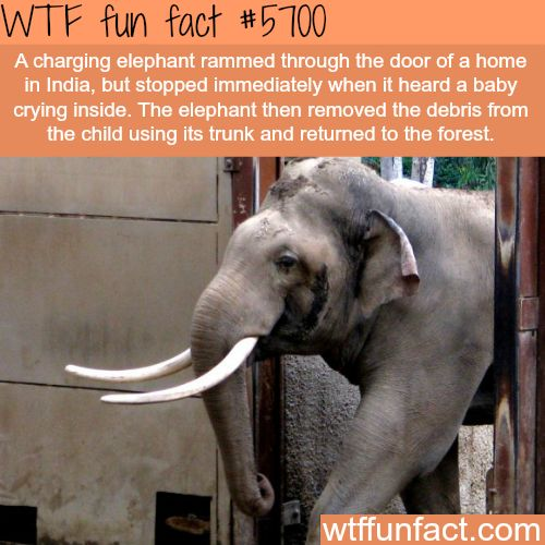 Another reason why elephants are the best animals - WTF? awesome facts