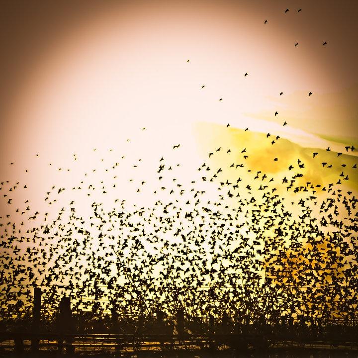 Streamzoo photo -  The flock