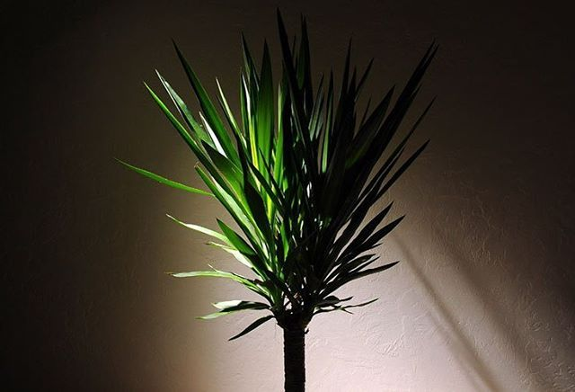 5 Houseplants That Thrive In Dark Rooms http://crwd.fr/2w2upl7 Liven up all your rooms with these plants @rodales #Indoor #Since1922🌳