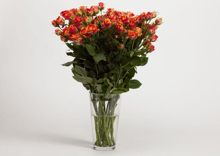 роза кустовая, доставка в комплекте с вазой
