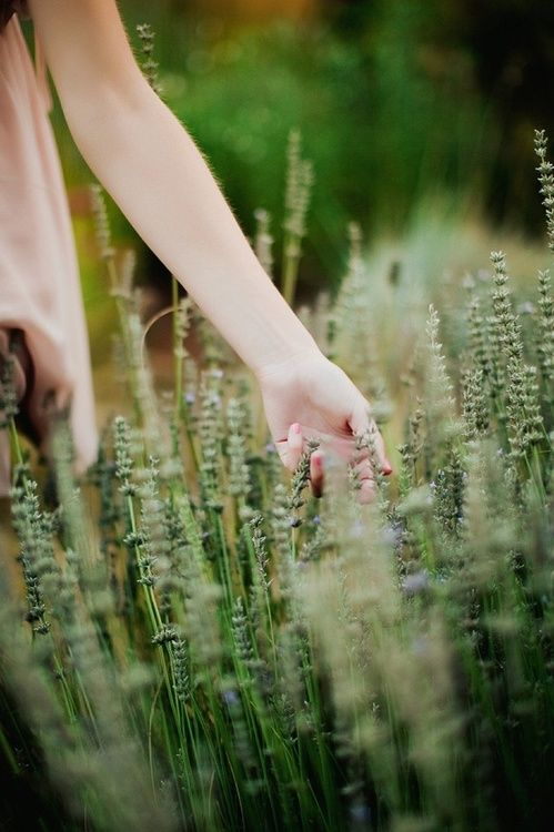 softWalks, Dreams, Floral Design, Country Photography, Lavender Fields, Hands, Gardens, Book Series, Flower