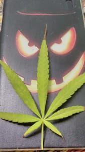 Monster leaf!!