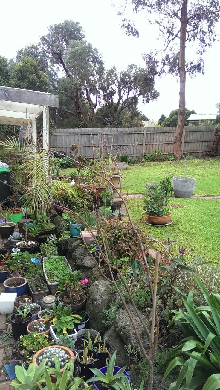 Lots of potted plants waiting to be planted