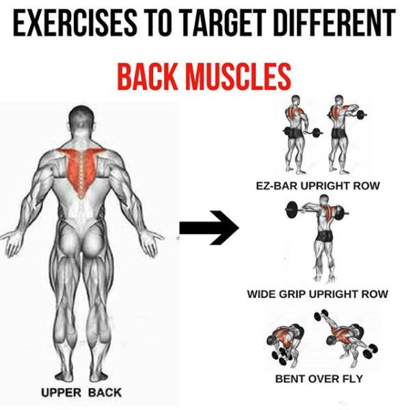 Upper Back - Exercises To Target Different Back Muscles 3