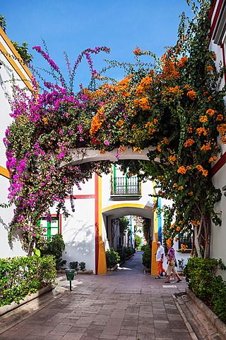 Spain , Canary Islands , Gran Canaria Island, Puerto de Mogan City, Bougainvillea flowers
