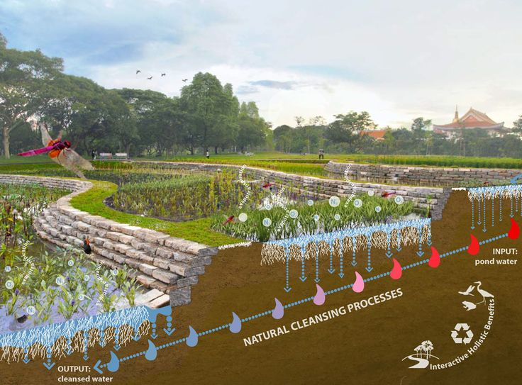 Bishan-Ang Mo Kio Park and Kallang River Restoration