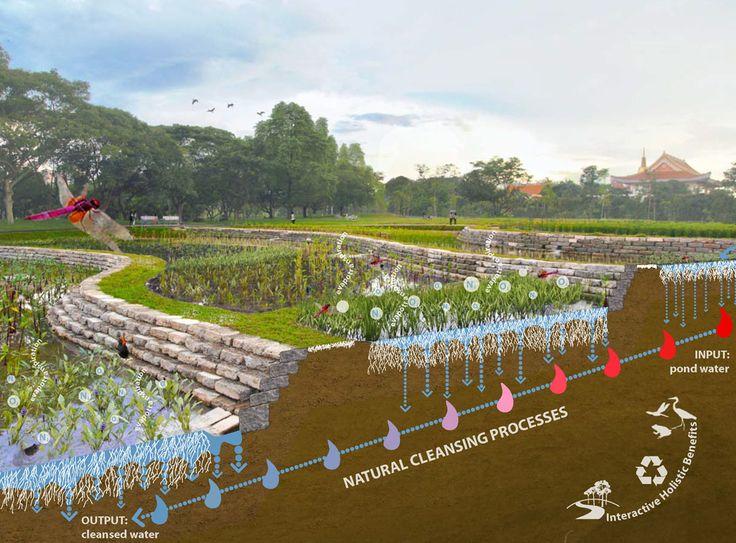 diques e cultivação