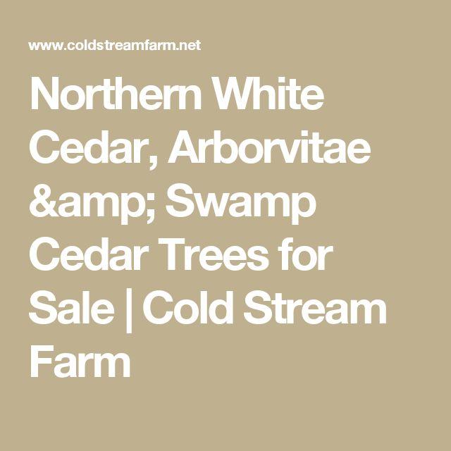 Northern White Cedar, Arborvitae & Swamp Cedar Trees for Sale   Cold Stream Farm