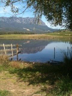 Mt Roland... black swans on the lake