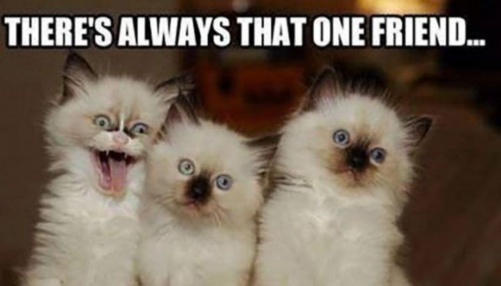 65 Best Funny Friend Memes To Celebrate Best Friends In Our Lives Friendship Humor Funny Friend Memes Friends Funny