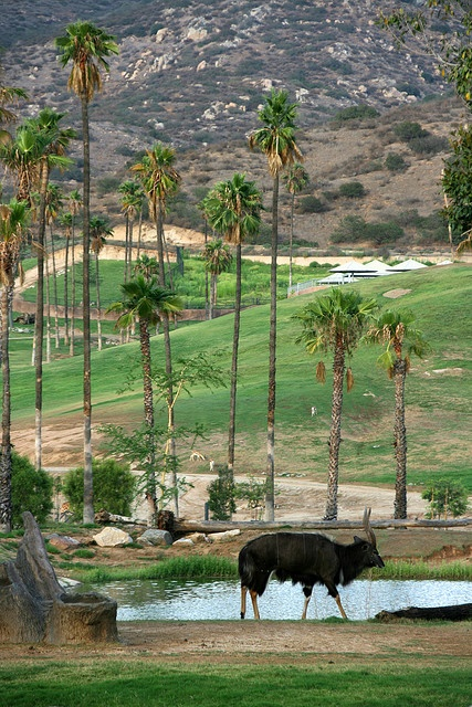 San Diego Wild Animal Park     The Wonders of Life!