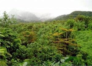 Selva y bosque tropical lluvioso, se encuentra en América Central y América del Sur. Los problemas ambientales que puede sufrir son sequías, deforestación e incendios.