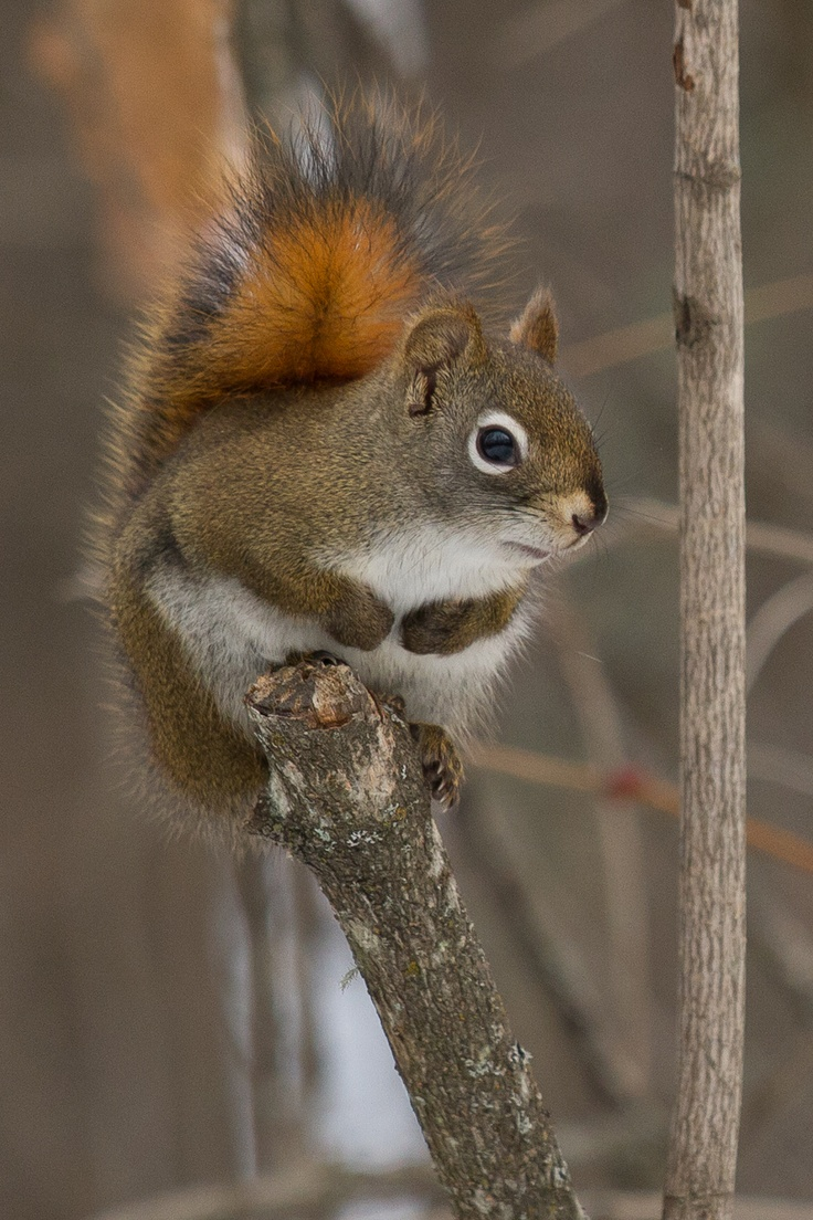 Squirrels always fascinate me. They will come right up to your door if you offer them some nuts, but don't start if you don't want them to keep coming back...