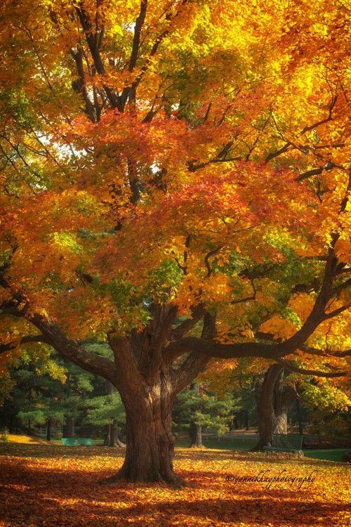 autumn colours mackenzie king...: Photo by Photographer Yannik Hay