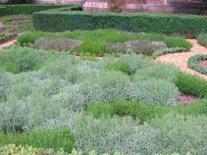 Около сорока лет тому назад в Европе и Америке возникла мода на злаки. Садовые дизайнеры стали активно использовать декоративные травы при создании так…