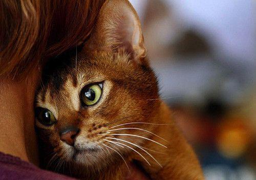 Kennenlernen katzen