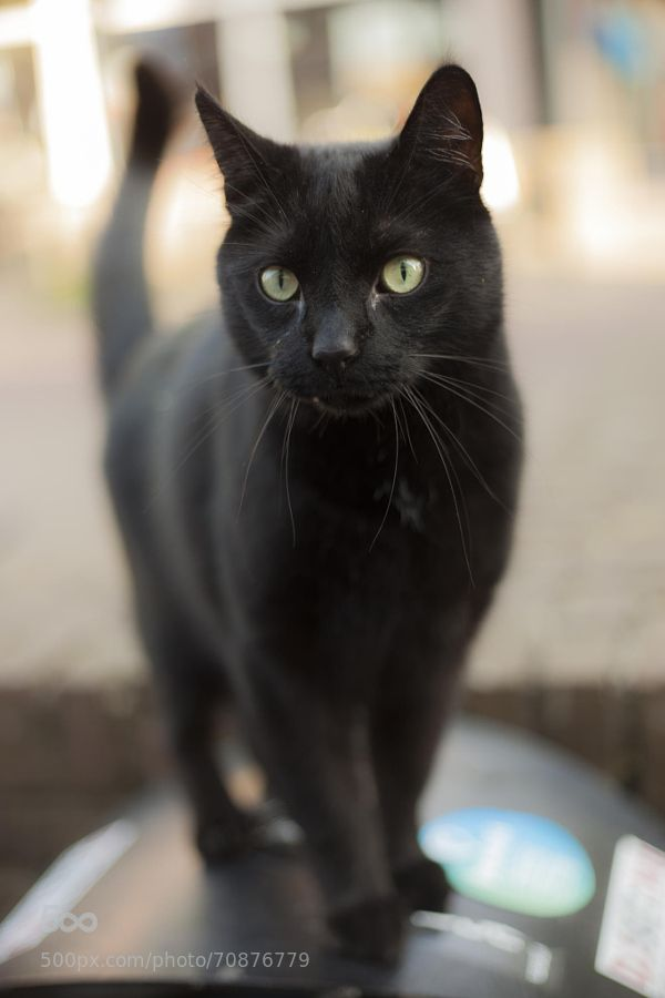 Please adopt from shelters and rescue groups. And, please spay or neuter and micro chip your pets. Please don't shop. When you adopt from a shelter you are saving a life and it just might be yours. Black cats and dogs are the last to be adopted. Please consider a black cat or dog the next time you adopt. Thanks!