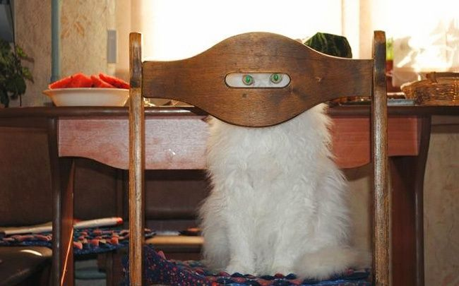18доказательств того, что коты— многогранные личности