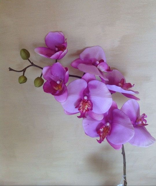 103 cm Real Touch Phalaenopsis Orchid  Purple by Anggerik on Etsy