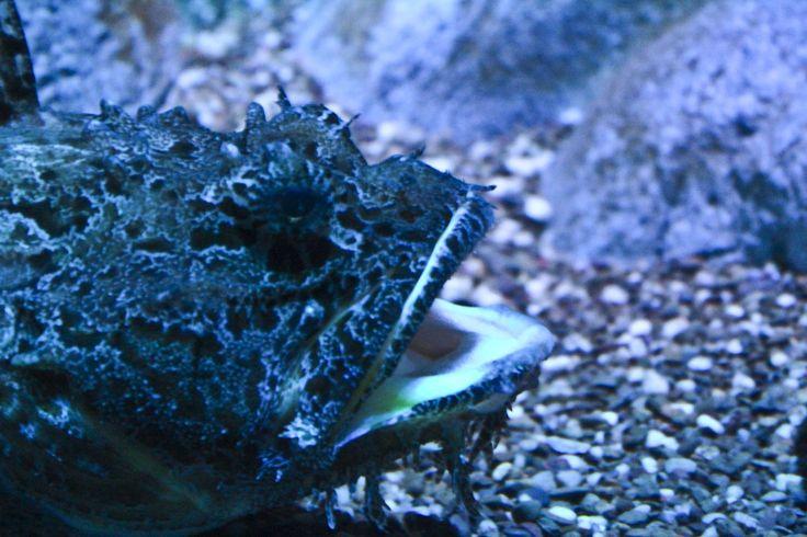 Ripleys aquarium.