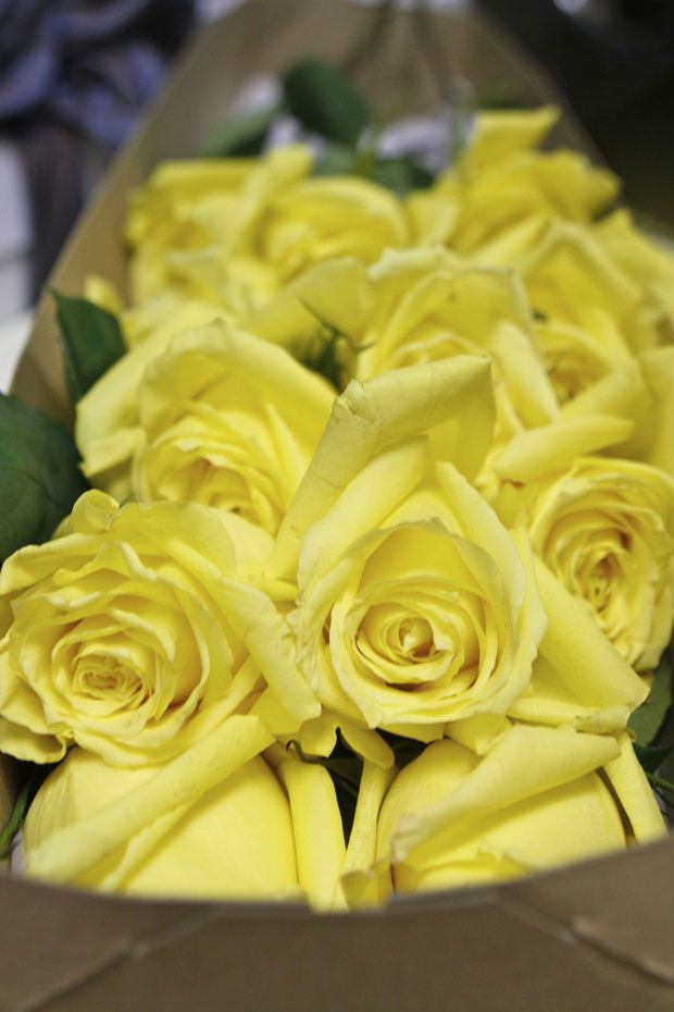 yellow roses for mother's day